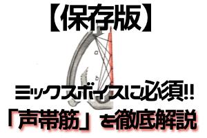 【保存版】ミックスボイスに絶対必要な筋肉【声帯筋を徹底解説】